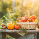 Red and yellow tomatoes in a wicker basket on wooden table. Outdoor - PhotoDune Item for Sale