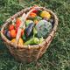 Organic vegetables grown on the farm - PhotoDune Item for Sale