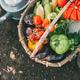 Organic vegetables. Harvest season - PhotoDune Item for Sale