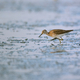Wood Sandpiper bird on wetlands - PhotoDune Item for Sale