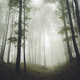 misty forest with trees and green vegetation natural labdscape b - PhotoDune Item for Sale