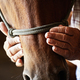 Farmers weathered hands on horse. - PhotoDune Item for Sale