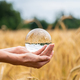 Female hands holding a crystal sphere over a wheat field - PhotoDune Item for Sale