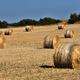 Straw bales, haystack after harvest against blue sky. Agricultural concept - PhotoDune Item for Sale