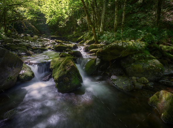 Refreshing scene of greenish light in a river in summer - Stock Photo - Images