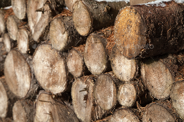 Pile of chopped fire wood prepared for winter - Stock Photo - Images