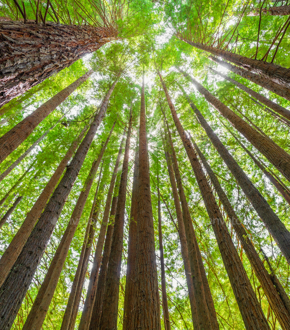 Old Growth - Stock Photo - Images