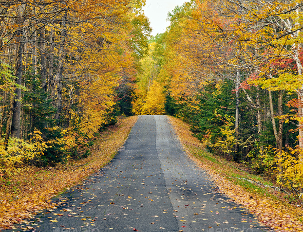 Autumn road in Maine - Stock Photo - Images