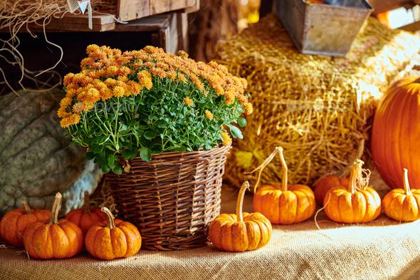Fresh pumpkins on farm market still life - Stock Photo - Images