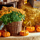 Fresh pumpkins on farm market still life - PhotoDune Item for Sale