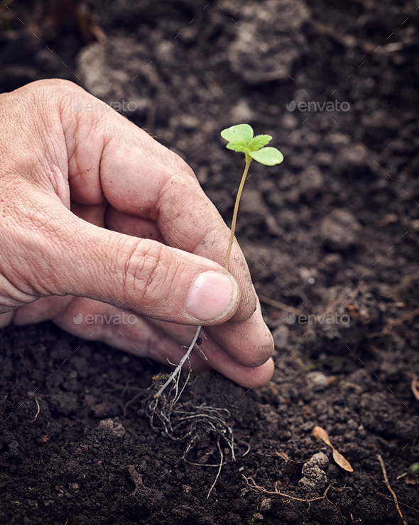 Hand holding a little green sprout against the background of the - Stock Photo - Images