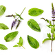 fresh mint leaves and blooming mint flower - PhotoDune Item for Sale
