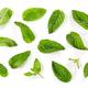 fresh green mint leaves background - PhotoDune Item for Sale