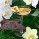 Elegant drinks with fresh orchids - PhotoDune Item for Sale