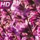 A Field Of Pink Flowers At Sunset - VideoHive Item for Sale