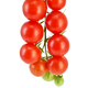 Tomatoes small on a branch - PhotoDune Item for Sale