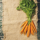 Carrots - PhotoDune Item for Sale