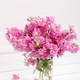 Matthiola flowers - PhotoDune Item for Sale