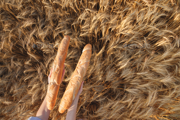 Two Crusty french baguettes in women's hands over ripening ears of yellow wheat field, top view - Stock Photo - Images