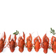 Several boiled crawfish isolated on white. top view. Flat lay - PhotoDune Item for Sale