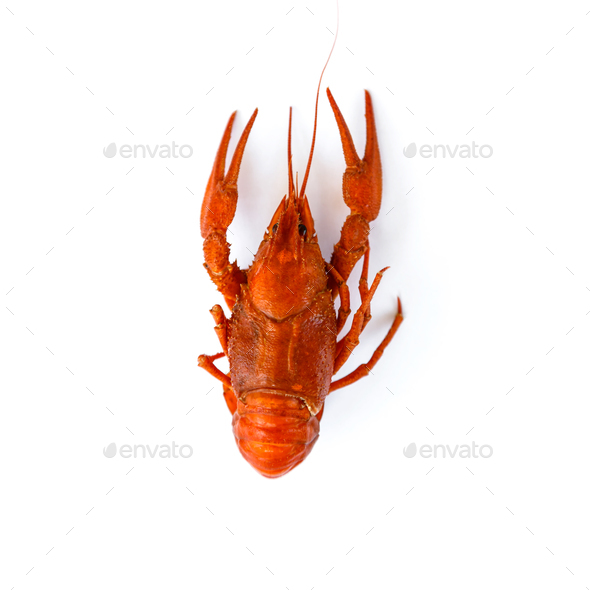 Boiled crawfish isolated on white. top view. Flat lay - Stock Photo - Images
