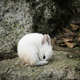 White cute little rabbit - PhotoDune Item for Sale