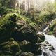 forest river natural scenery with green plants - PhotoDune Item for Sale