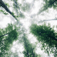 view toward sky in misty forest with green foliage - PhotoDune Item for Sale