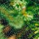 Spider web with raindrops in green plant - PhotoDune Item for Sale