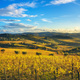 Panzano in Chianti vineyard and panorama at sunset. Tuscany, Ita - PhotoDune Item for Sale