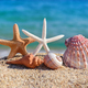 Shells and starfish on the beach against the background of the s - PhotoDune Item for Sale
