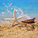 A white starfish and a shell on the beach against the background - PhotoDune Item for Sale