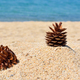 The pine cones on sand near sea on a hot sunny day - PhotoDune Item for Sale