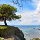 Beautiful seascape with tree, rocks and clear transparent water - PhotoDune Item for Sale