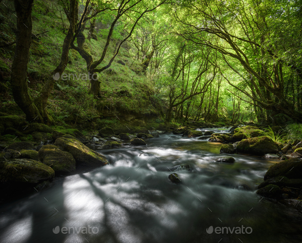 Old Forest crossed by a River - Stock Photo - Images