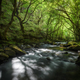 Old Forest crossed by a River - PhotoDune Item for Sale
