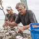 Fishermen sorting a catch of shrimp on a ship. - PhotoDune Item for Sale