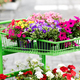 Assortment of brightly colored summer flowers - PhotoDune Item for Sale