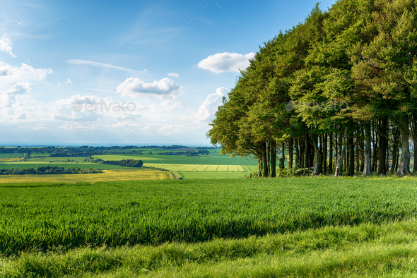 Summer on Hackpen Hill - Stock Photo - Images
