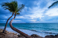 Tropical beach with palm trees and ocean - PhotoDune Item for Sale