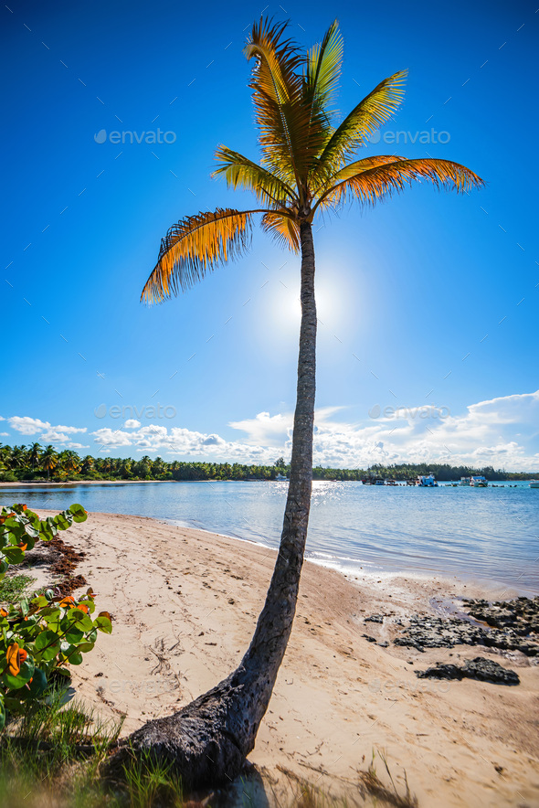 Tropical beach with palm trees and ocean - Stock Photo - Images