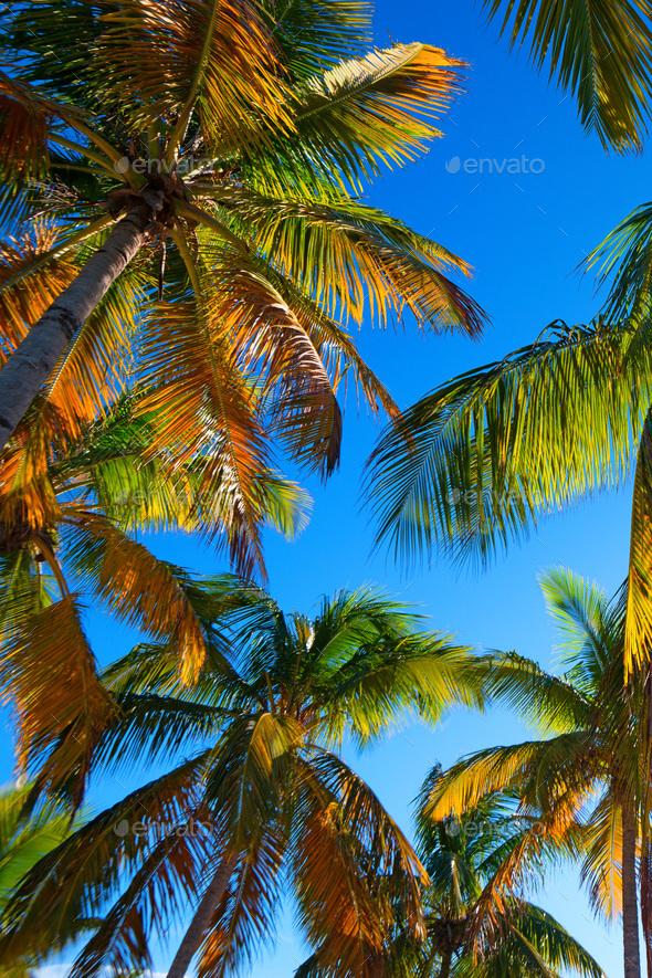 Tropical beach with a palm tree - Stock Photo - Images