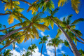 Tropical beach with palm trees - PhotoDune Item for Sale