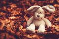Little sad rabbit - PhotoDune Item for Sale