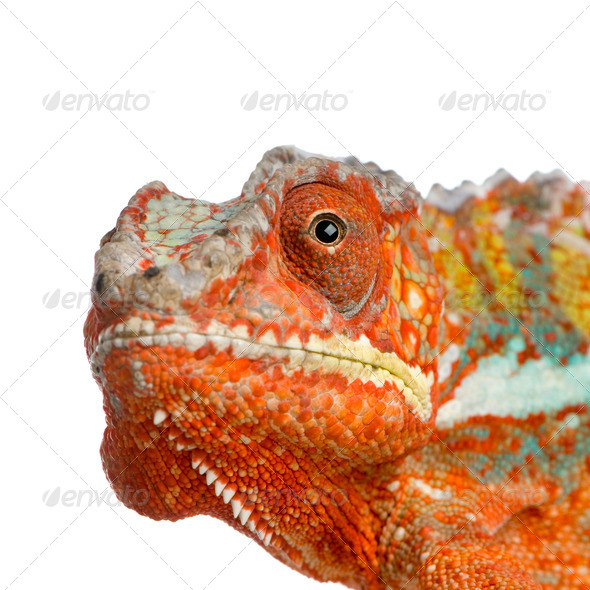 dragon's head - Stock Photo - Images