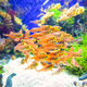 School of fish - PhotoDune Item for Sale