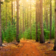 Forest Walk - PhotoDune Item for Sale
