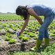 Woman use digital soil meter in the soil. Lettuce plants. Sunny - PhotoDune Item for Sale