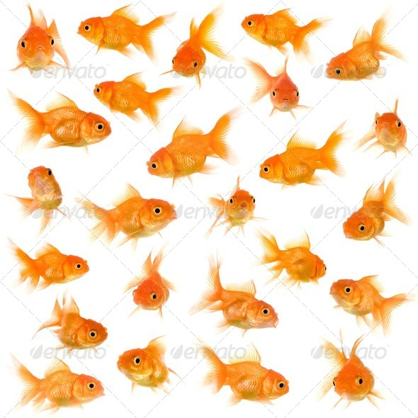 Group of goldfishes - Stock Photo - Images