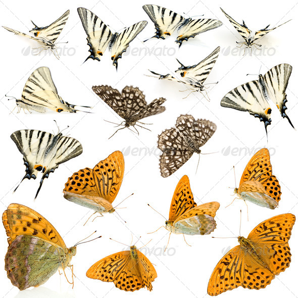 16 butterflies - Stock Photo - Images